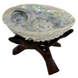 Abalone schelp  + Cobra driepoot Haliotis Midae salie smudgen